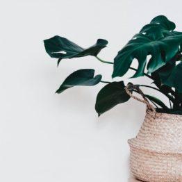 Nos plantes les plus rares