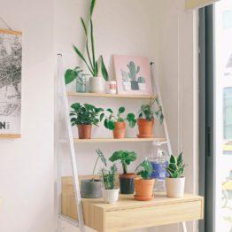 Toutes les plantes du shop